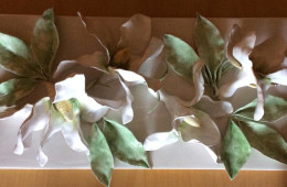 White Magnolia