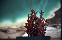 Ephemeral Sea: Corals